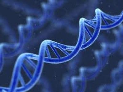 gene 遺伝子